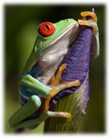 how to keep a tree frog