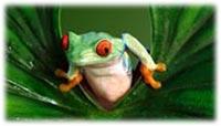 frog tank supplies